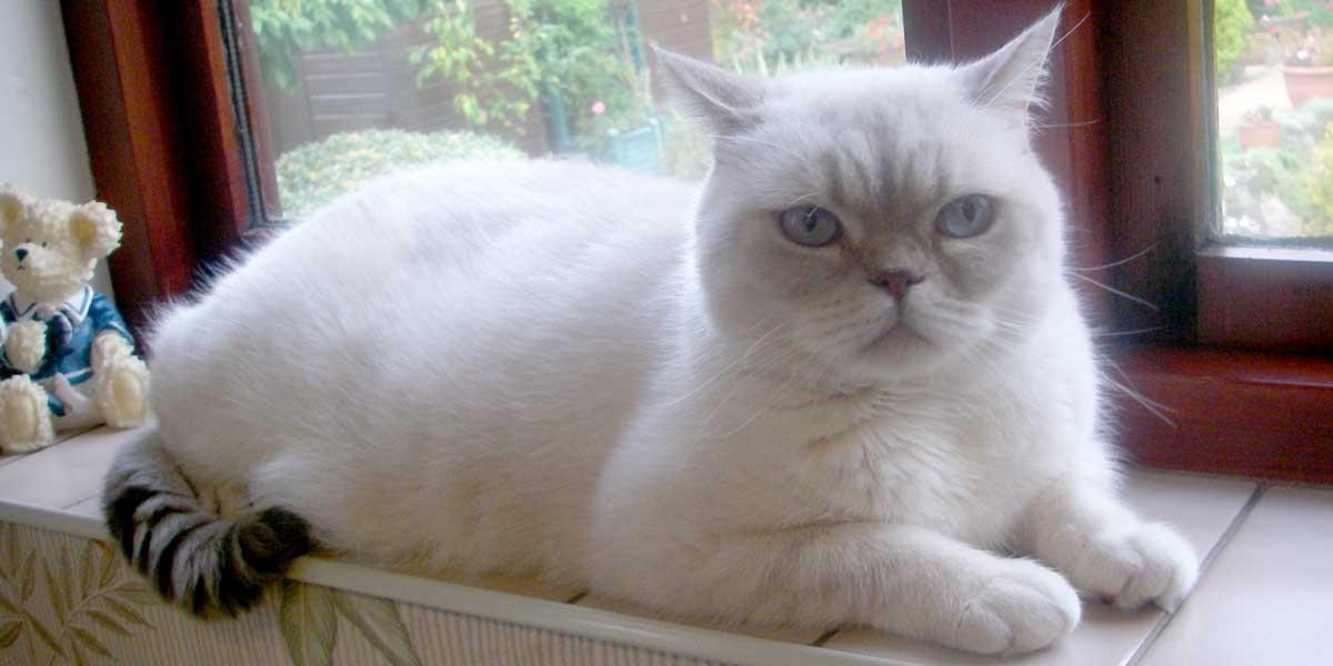 Pet Animal Transport - Strawberry Bum, Cat