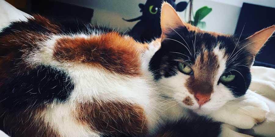 Pet Animal Taxi - Cat To Berlin