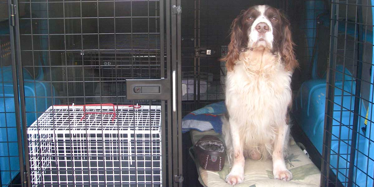 Secure Pet Transport - Charlie In PETS Taxi